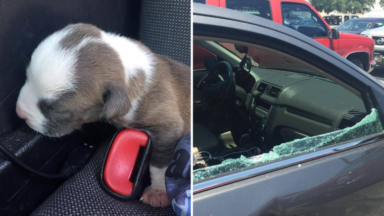 puppy rescued from car