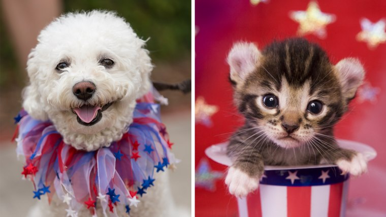 Experts have some smart tips to keep your pets safe during Fourth of July fireworks.