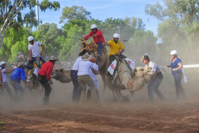Image: Alice Springs Camel Cup