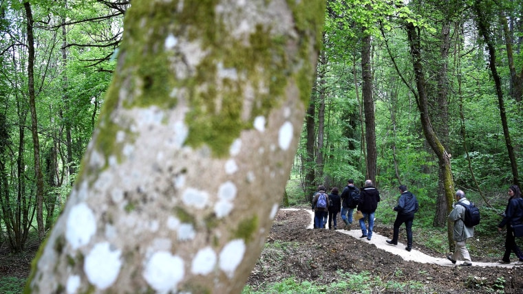 Douaumont wood
