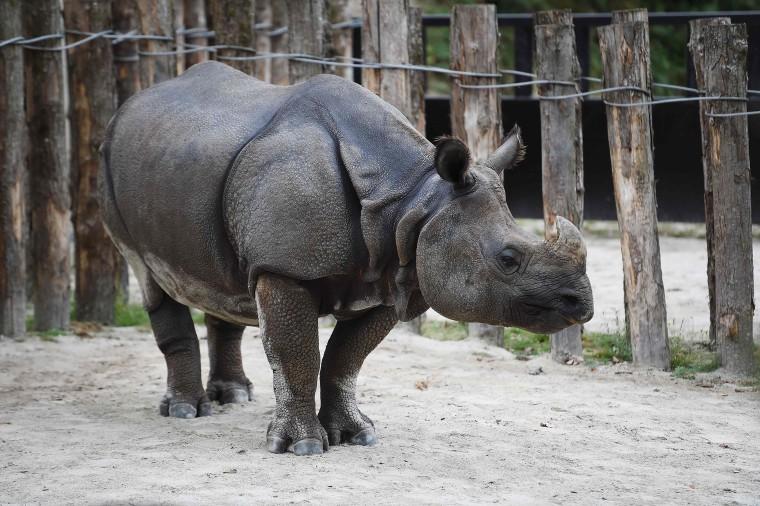 Rhino in France