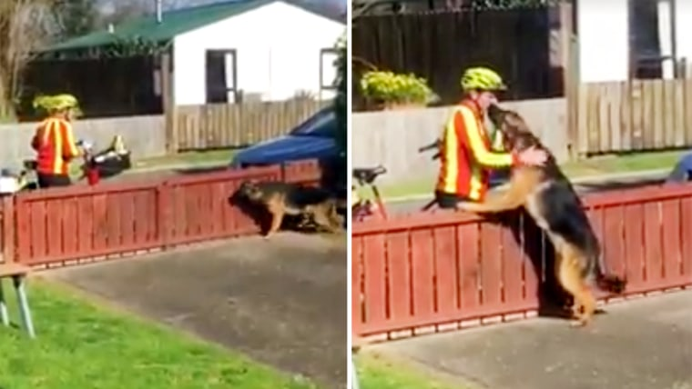 A mailman in Tauranga, New Zealand, takes a break to play with a dog.