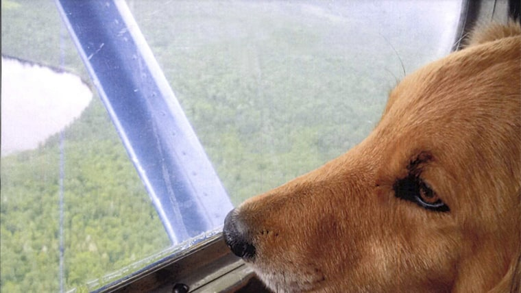 dog reunites with its family