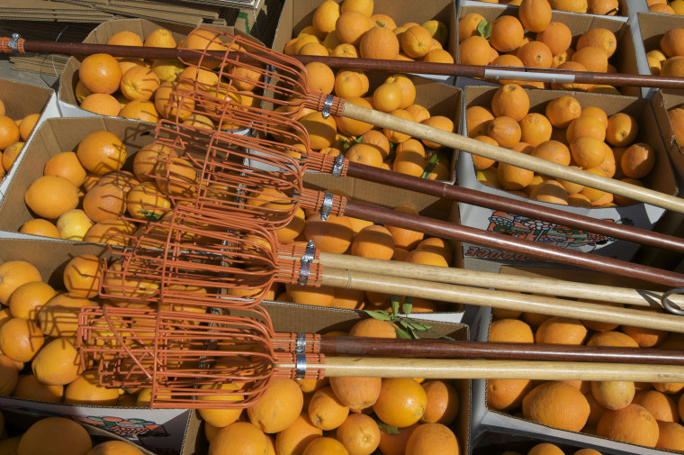 IMAGE: Food gleaning