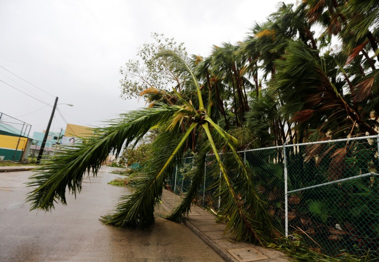 Image: A fallen palm tree is seen along the street after Hurricane Earl hits, in Belize City