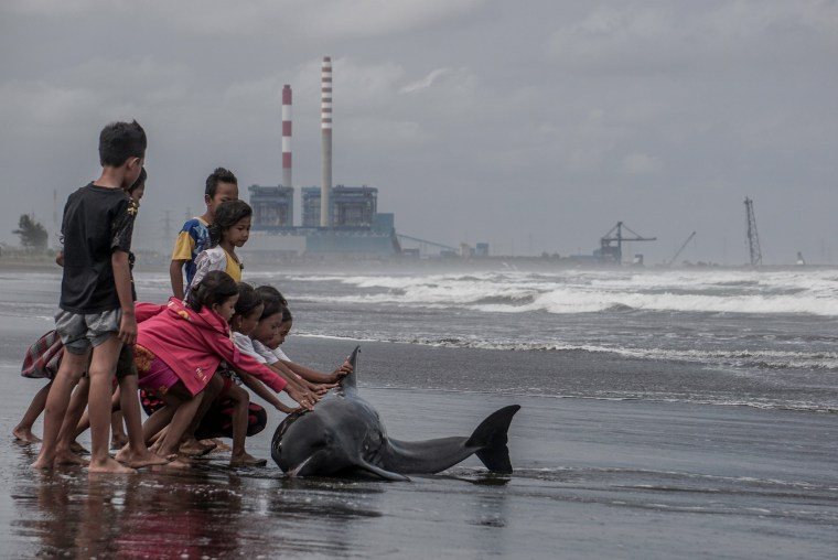 Image: Children try to push an injured and weak dolphin back into the water after it washed ashore during bad weather and high tide on a beach in Cilacap, Central Java, Indonesia