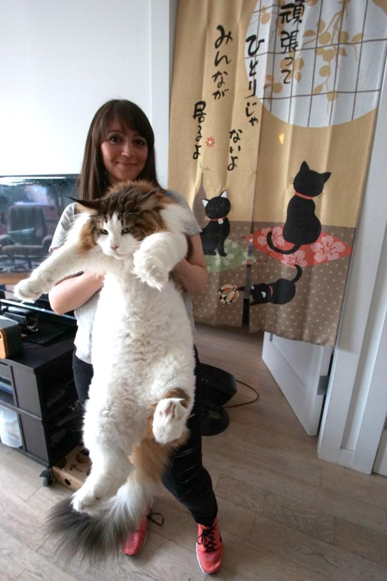 Samson the cat, largest cat in New York