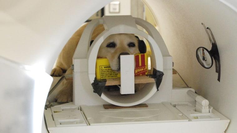 Dog MRI