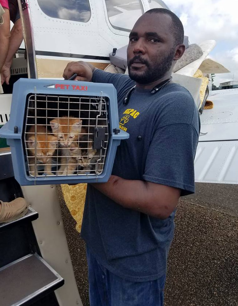 Volunteers are helping to save animals stranded by Louisiana floods
