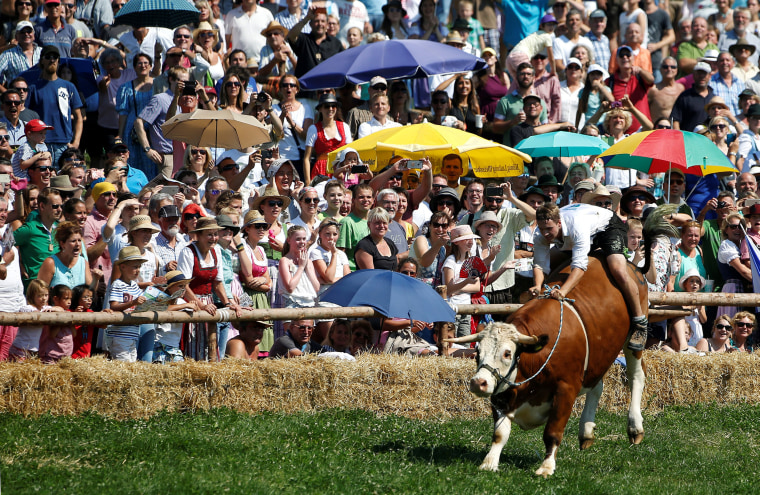 Image: Farmer rides on ox during traditional ox race in Muensing