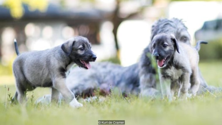 First known puppy twins