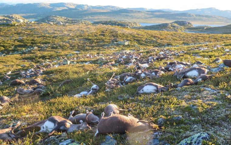 Image: NORWAY-ANIMALS-WEATHER
