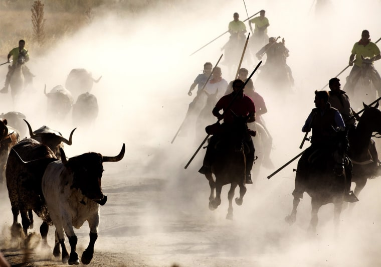 Image: First bull run with horses in Cuellar