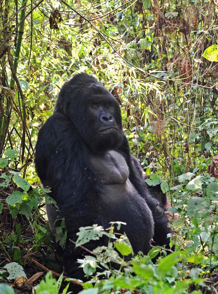 Image: FILES-ENVIRONMENT-US-ANIMAL-DRC-CONSERVATION-IUNC