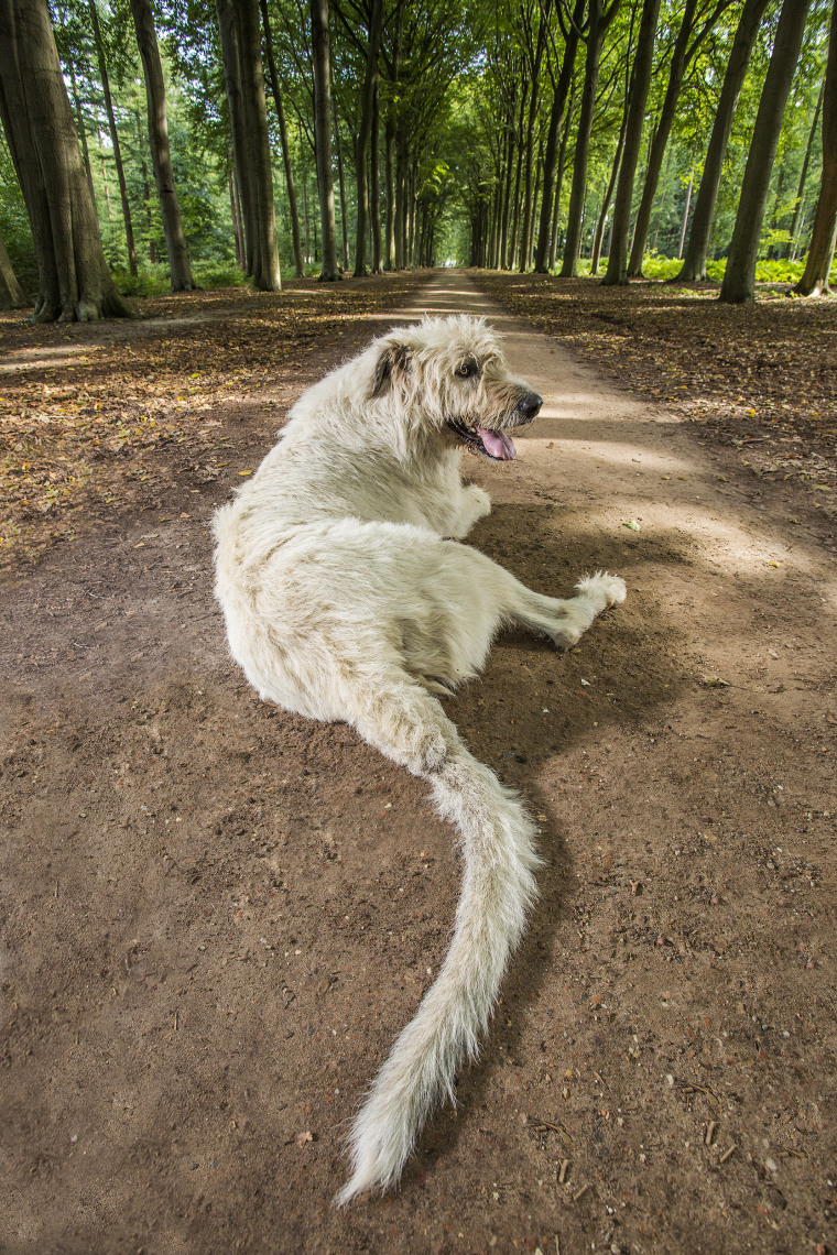 Keon - Longest Tail On A Dog