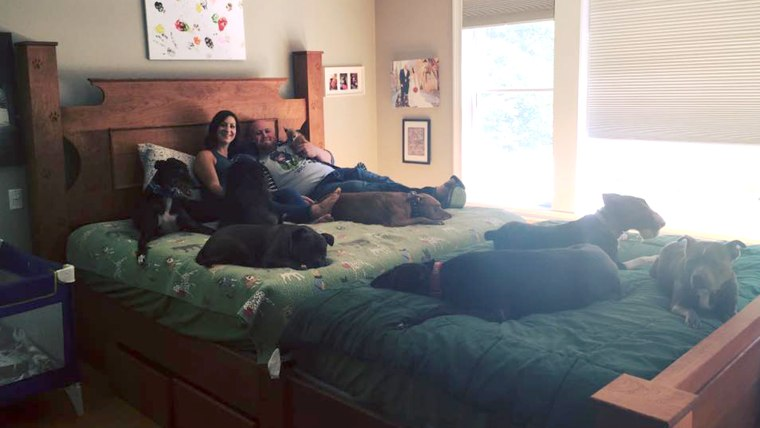 Couple who built a giant bed so they could sleep with their many dogs.