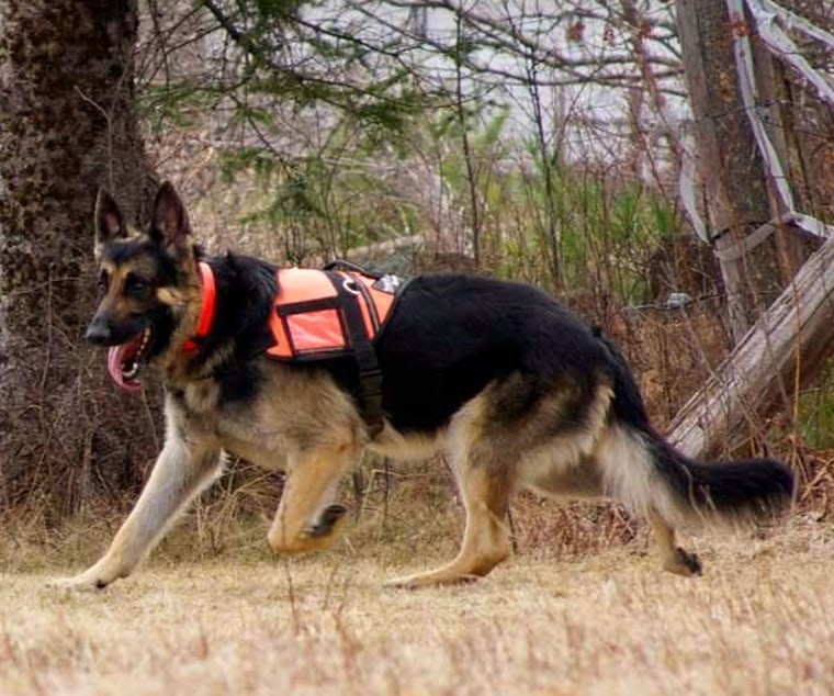 Kobuk the search and rescue dog