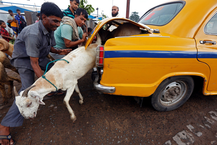 Image: A goat tries to escape from the boot of a taxi after being purchased at a livestock market ahead of the Eid al-Adha festival in Kolkata