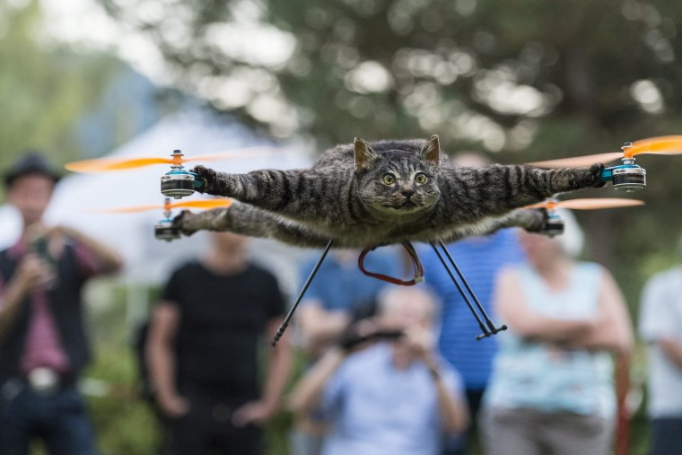 Image: Taxidermy animals mounted on drones
