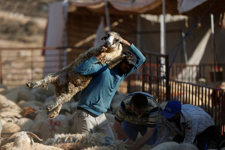 Image: A vendor carries a sheep after selling it to a customer at a livestock market, ahead of the Eid al-Adha festival, in Amman