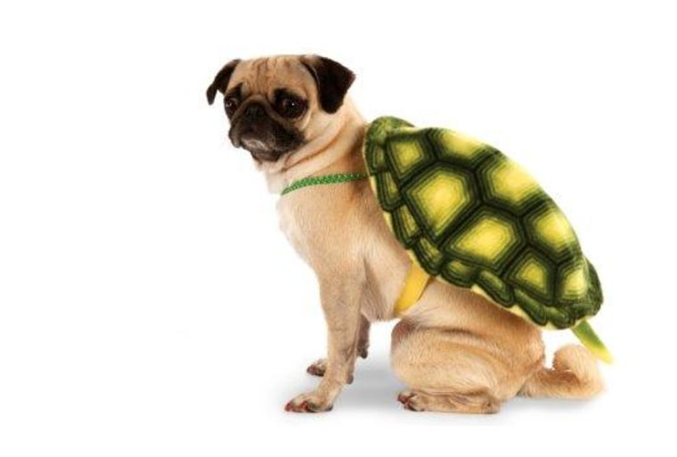 turtle dog halloween costume