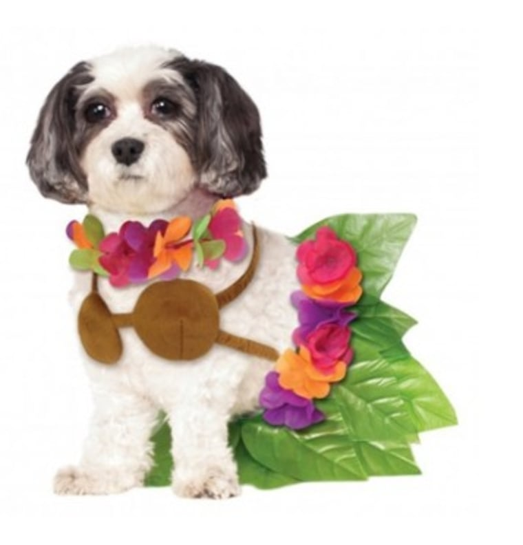 Halloween Dog Costume Ideas 32 Easy Cute Costumes For Your Canine