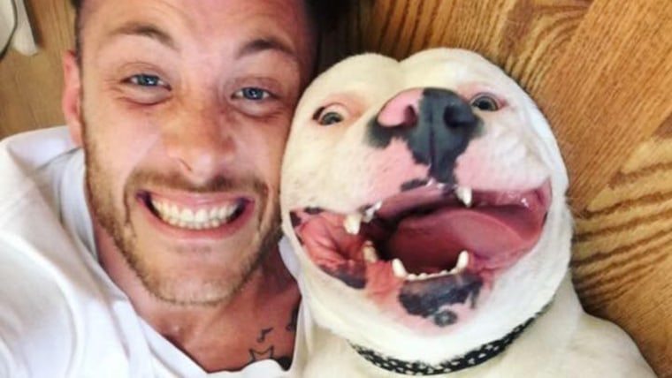 Diggy the smiling dog, pit bull