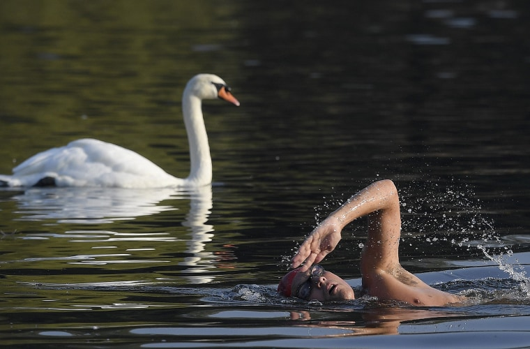 Image: Swimmers take a dip amongst swans during the early morning at The Serpentine Lake in London, Britain