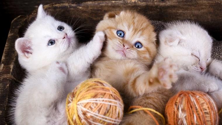 cute baby kittens