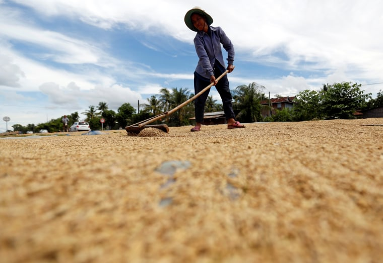 Image: A woman dries unhusked rice on a road in front of her home in Kampong Thom province