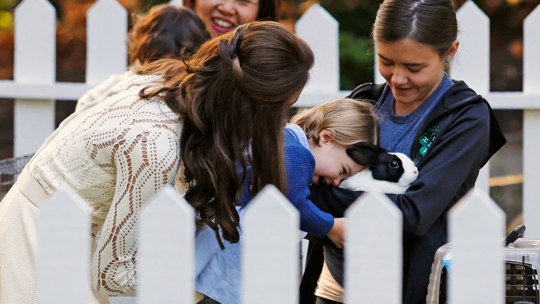 Britain's Catherine, Duchess of Cambridge, looks on as Princess Charlotte (2nd R) meets a rabbit at a children's party at Government House in Victoria