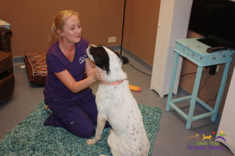 Toledo animal shelter has real-life room for animals