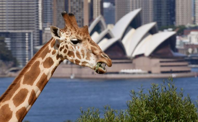 Image: AUSTRALIA-ANIMAL-ZOO