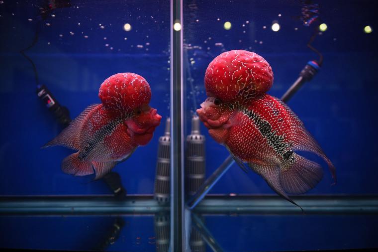 Image: THAILAND-ANIMAL-FISH-OFFBEAT