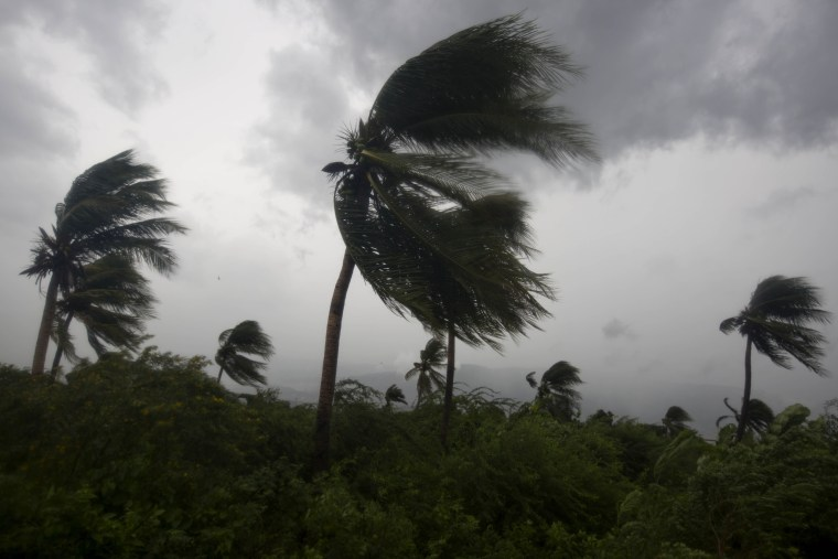 Image: Wind blows coconut trees during the passage of Hurricane Matthew in Port-au-Prince