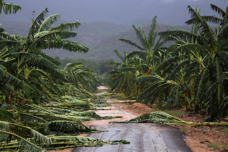 Image: A view of partially destroyed banana trees at a road side after the passage of hurricane Matthew on the coast of Guantanamo province