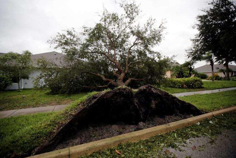 Image: A fallen tree is seen outside a house in the aftermath of Hurricane Matthew in Daytona Beach