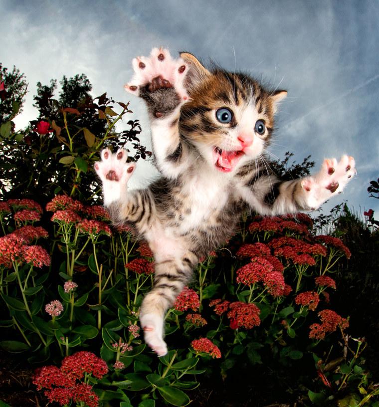 """Cat's fly in Seth Casteel's \""""Pounce.\"""""""