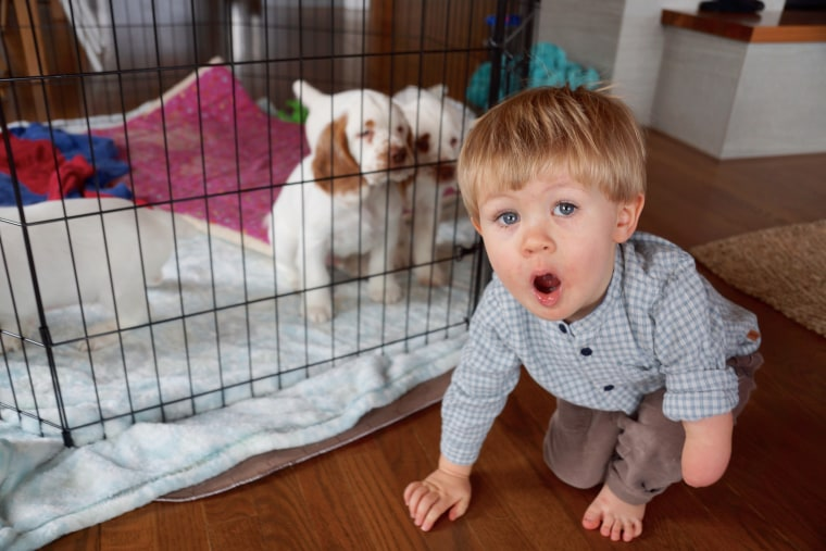 Pile of Puppies arranges for chronically ill children to be visited by a litter of puppies.