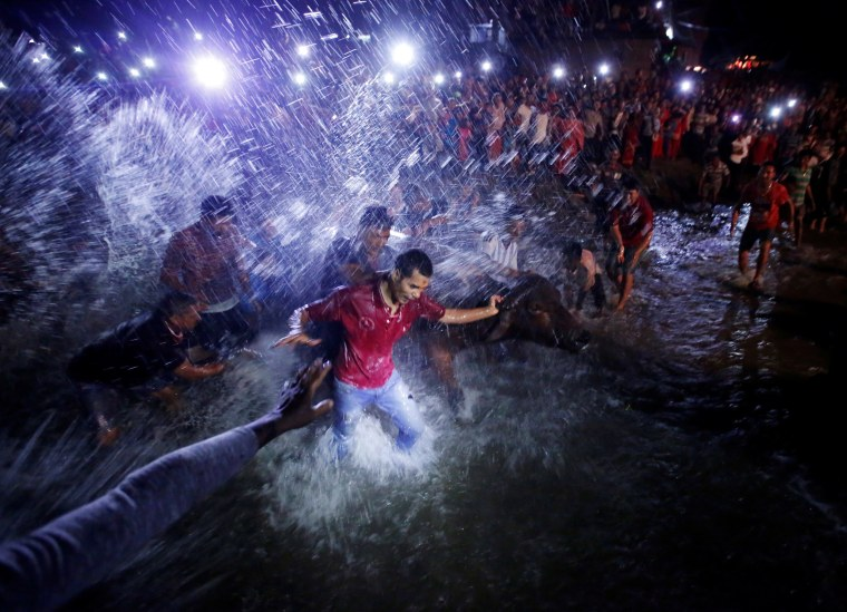 "Image: People splash water on a buffalo to prepare it for sacrifice during ""Dashain"", Hinduism's biggest religious festival in Bhaktapur"