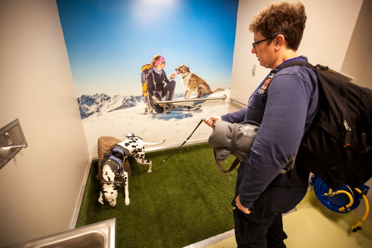 At Denver International Airport, post-security pet potties have murals featuring dogs at play.
