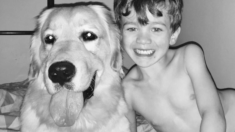 Boy meets service dog