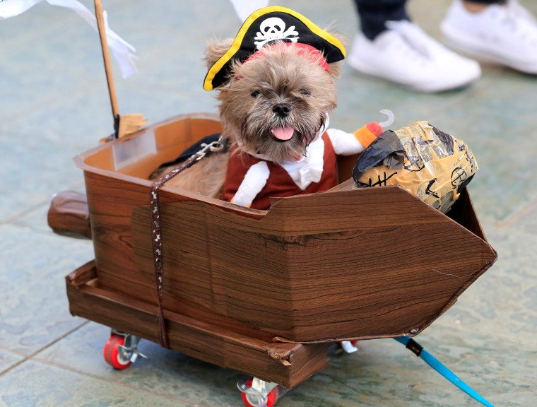Image: Terrier puppy wears a pirate costume during 'A Petrifiying Trail Pet' costume party at a mall in Pasay city