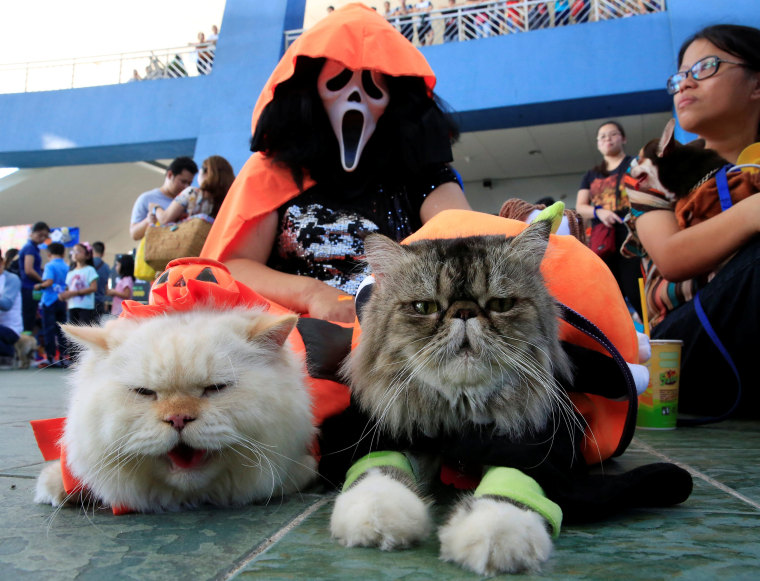 Image: A pet owner wears a Halloween mask with her Persian cats as they take part in a 'A Petrifiying Trail Pet' costume party at a mall in Pasay city