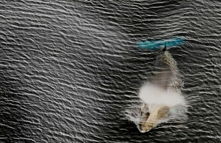 Image: Antartic-Australia Enviroment Conservation