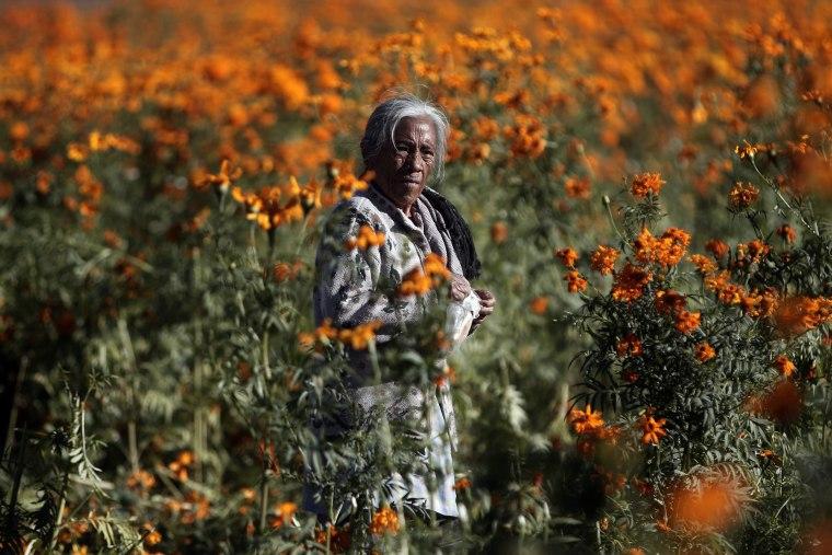 Image: Day of the Dead flower harvest