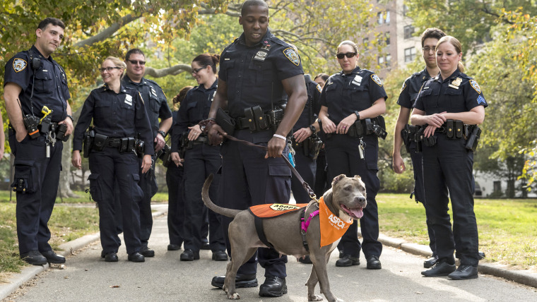 Jamie's day out with the NYPD was to help her find a home.