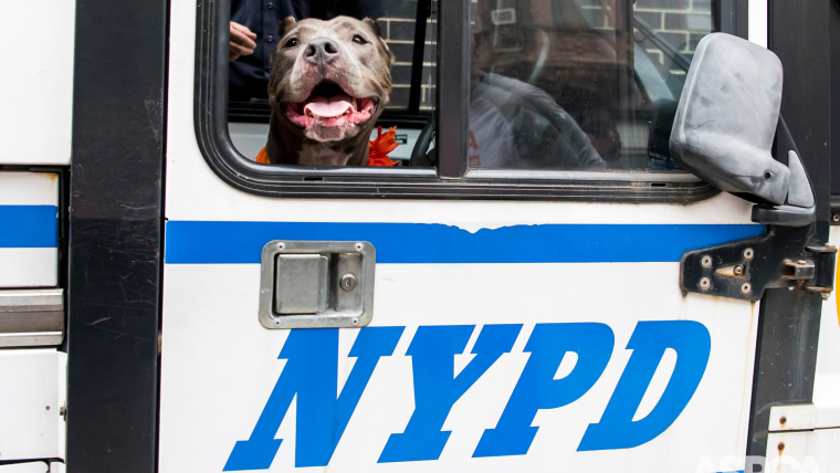 Jamie's special day out with NYPD officers included a ride in a police van.