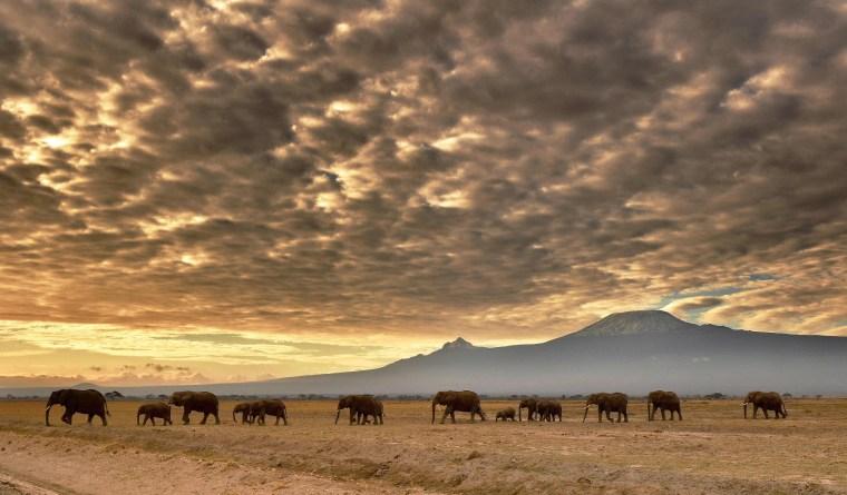 Image: TOPSHOT-KENYA-NATURE-CONSERVATION-ANIMAL-ELEPHANT-WILDLIFE-FEATU