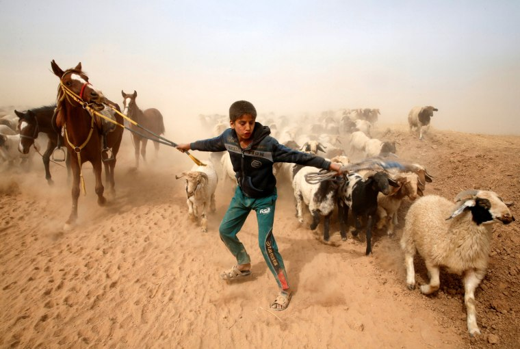 Image: A displaced Iraqi boy leads his animals to safety after escaping from Islamic State controlled village of Abu Jarboa during clashes with IS militants near Mosul